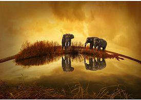 Štěstí sloni