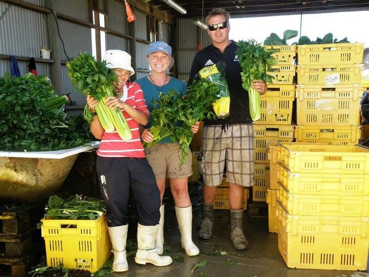 Práce na zeleninové farmě, Nový Zéland